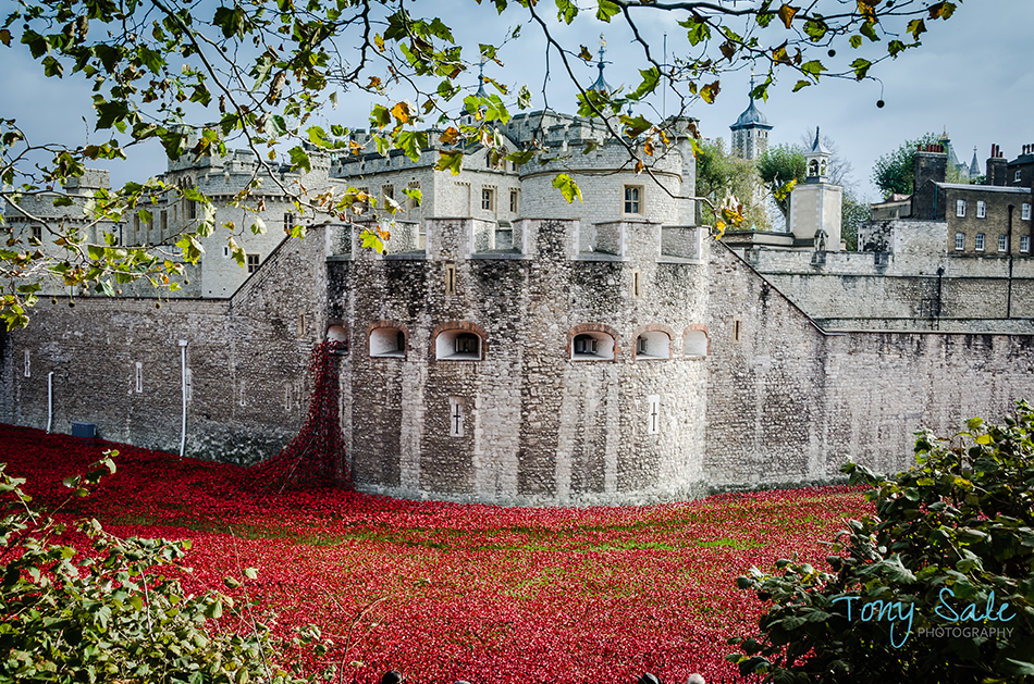 Tower of London Poppies_Tony Sale Photography_003
