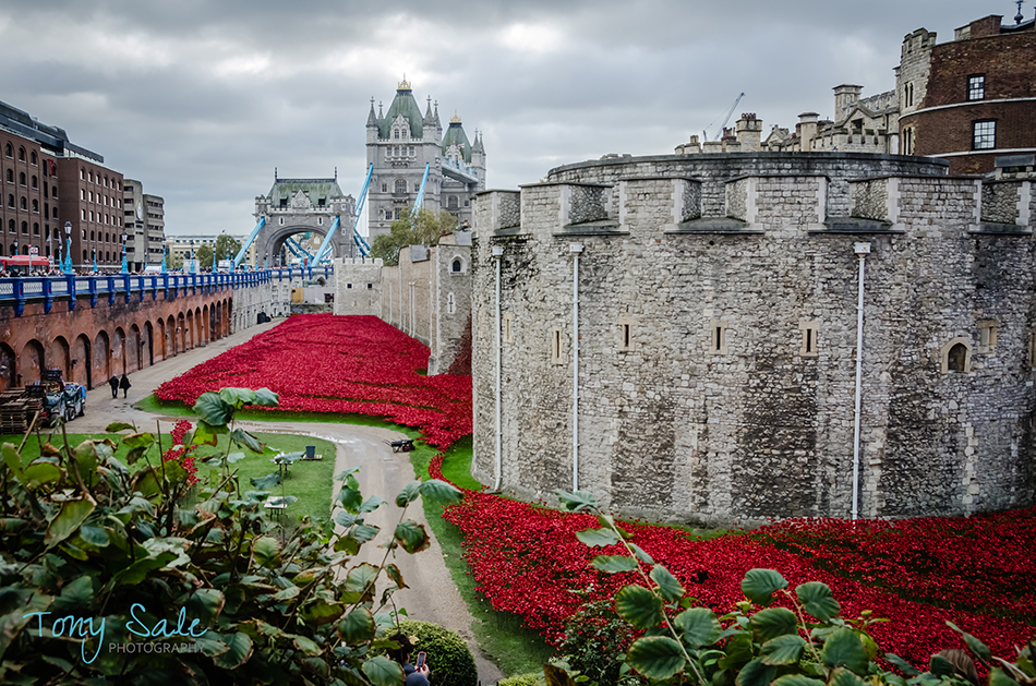 Tower of London Poppies_Tony Sale Photography_004