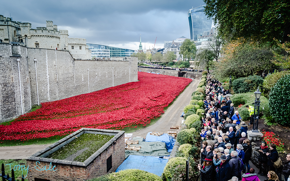 Tower of London Poppies_Tony Sale Photography_005