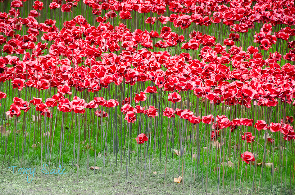 Tower of London Poppies_Tony Sale Photography_006