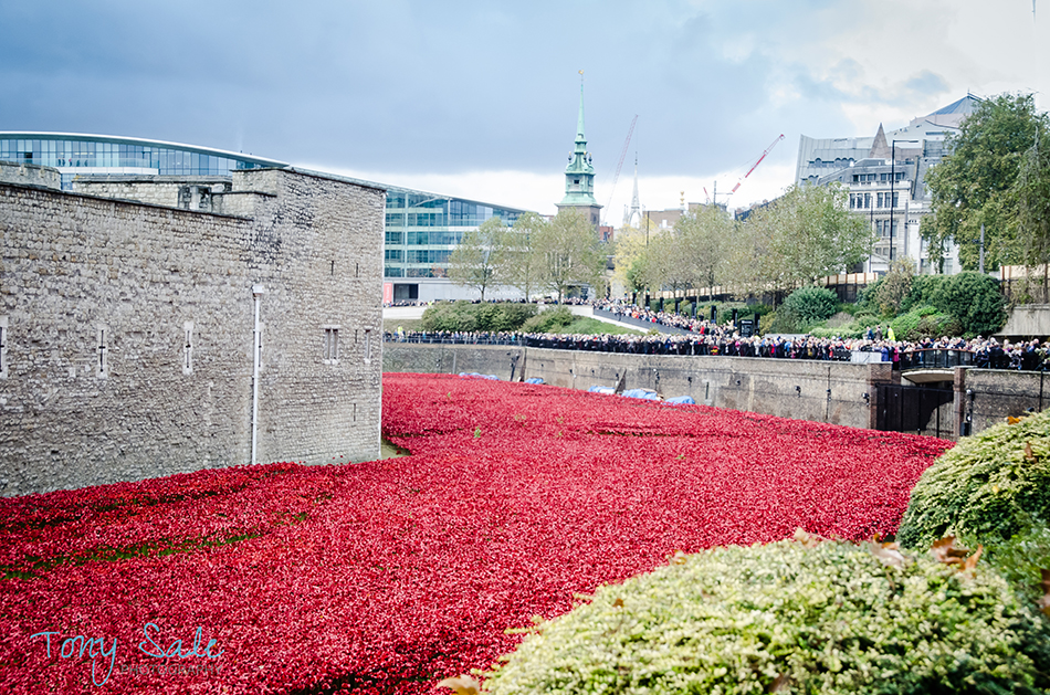 Tower of London Poppies_Tony Sale Photography_007