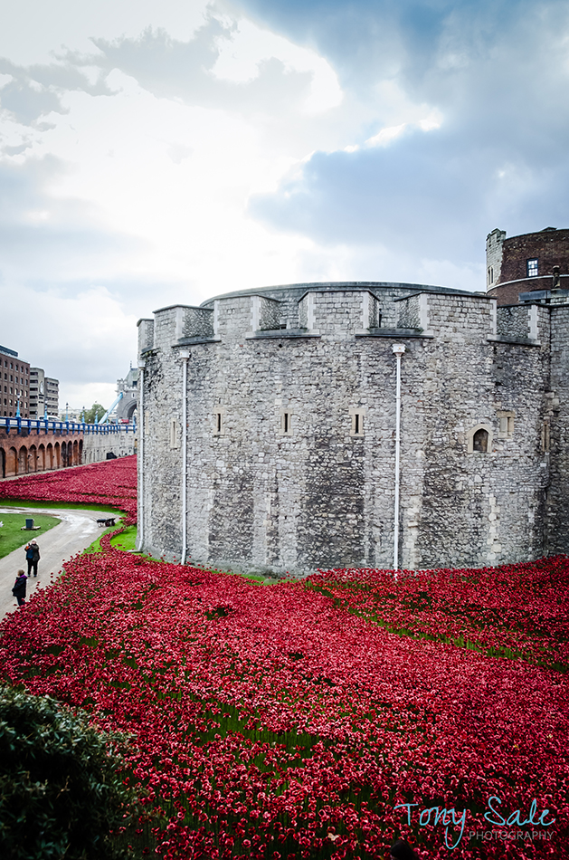 Tower of London Poppies_Tony Sale Photography_008