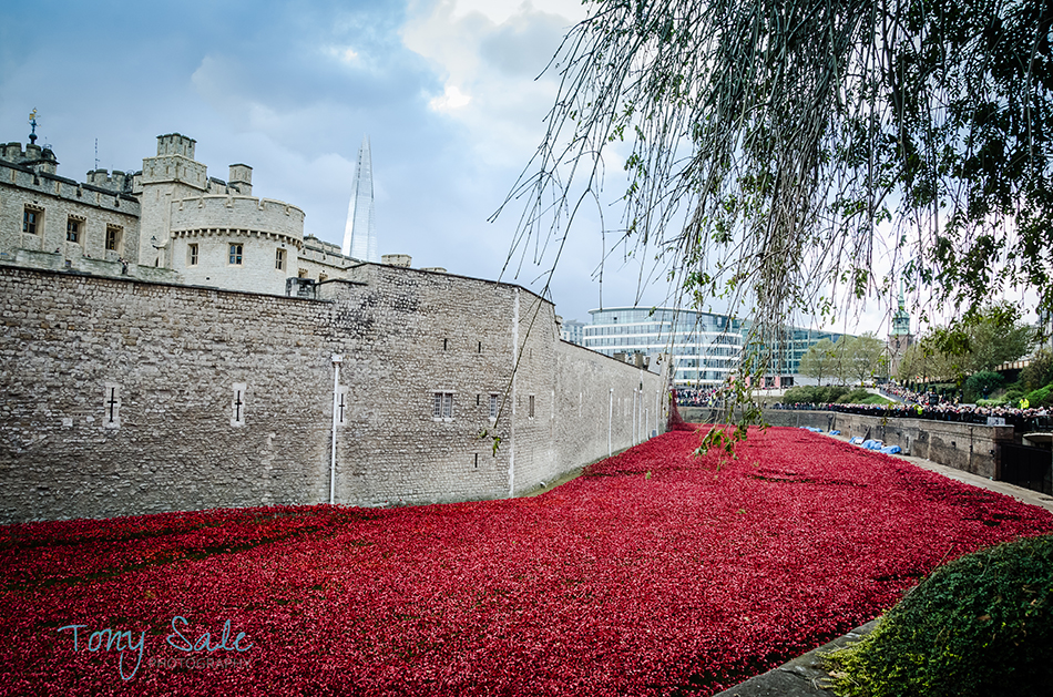 Tower of London Poppies_Tony Sale Photography_009