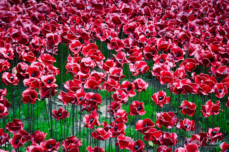 Tower of London Poppies_Tony Sale Photography_010