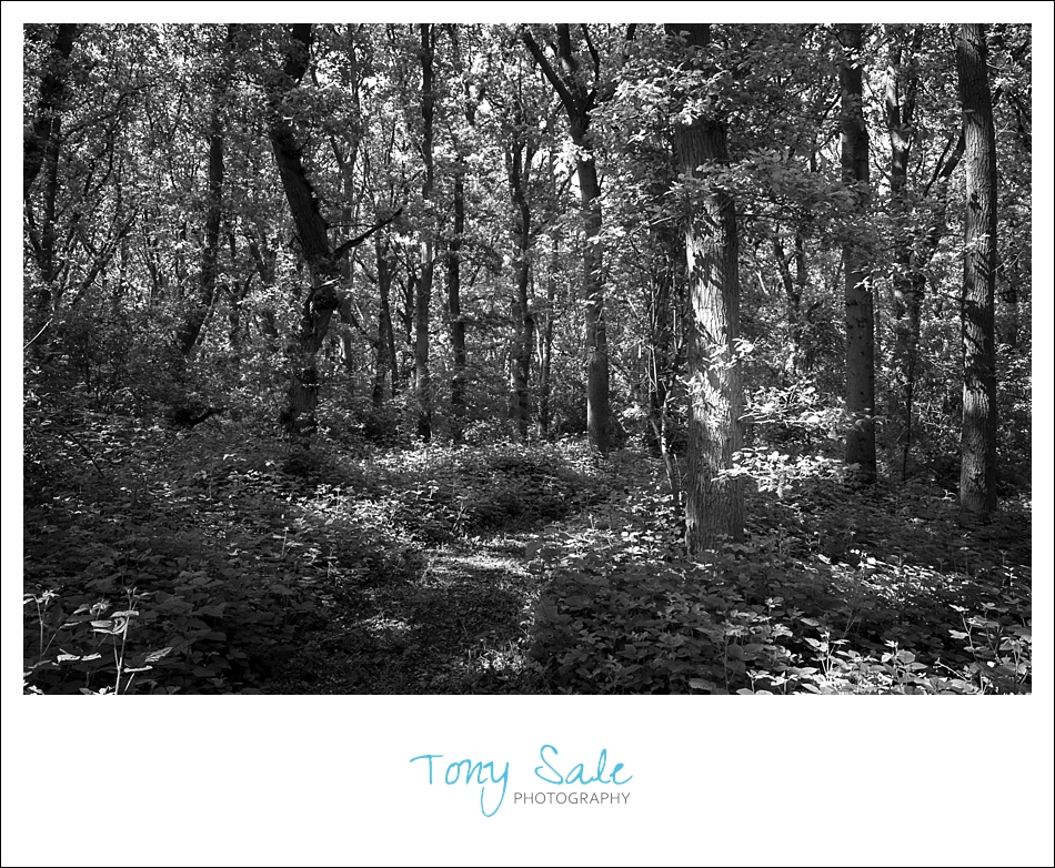Beautiful Gardens_Tony Sale Photography_003