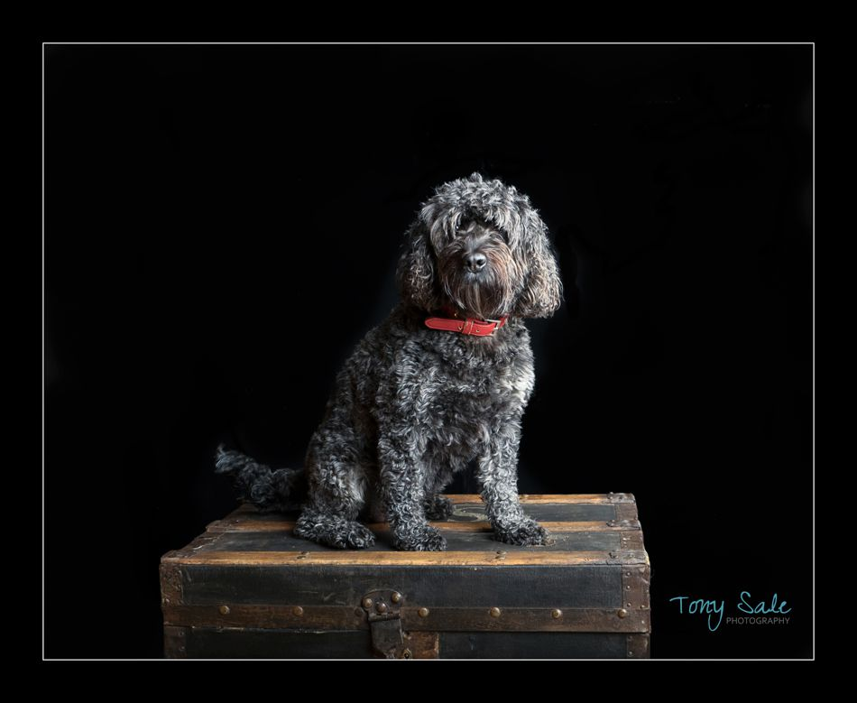 Pet Photography – Essex